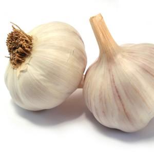 Garlic 450x450