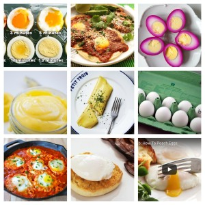 everything about eggs