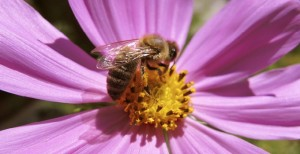 Bee nice! Save the honey bees
